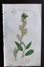 Sowerby C1805 Hand Col Botanical Print. Broad Leaved Monadelphous Willow 1146